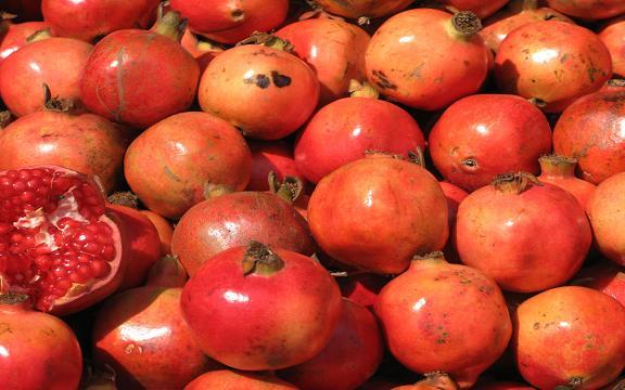 Pomegranate_AllPhotoIr_1506_8-M.JPG